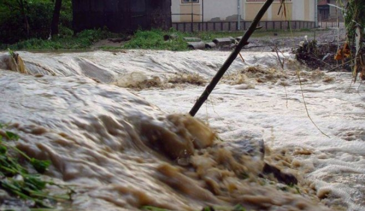 Imundatii 2